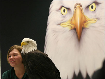 Along the Inside Passage, bald eagles pose for pictures at the Alaska Raptor Center in Sitka.
