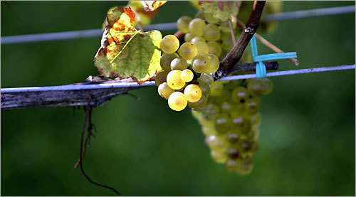 At Greenvale Vineyards, a small number of estate wines are grown along the Sakonnet River.