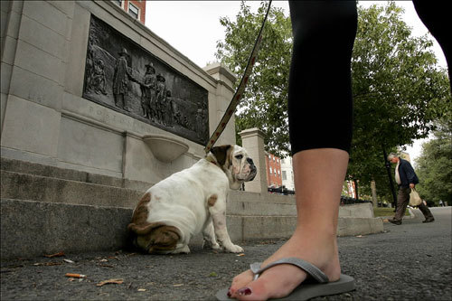 Law student and Beacon Hill resident Kathleen Martin walked her 5-month-old bulldog puppy Sebastian through the Boston Common.