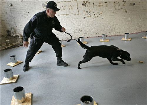 Boston Police Officer Moe Langer held Betty the bomb dog as she stretched for a treat after completing an exercise in detection of explosive material. Betty is part of a new program from the Bureau of Alcohol, Tobacco, Firearms, and Explosives which trains local dog for detection of explosives.