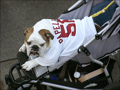 This dog went to the rally dressed as closer Jonathan Papelbon.