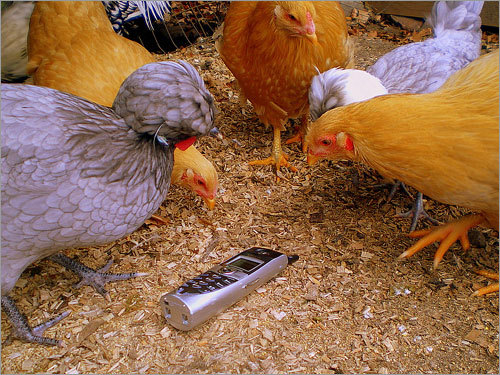 Darlene Harris of Troy, N.H. captured a photo of her chickens attacking her cell phone in the coop. Harris said she heard a commotion, turned around, and saw a comical scene. The highlight of her rural day life was submitting it to CNN and having it posted.