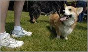 pet friendly guide
