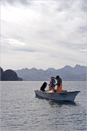 Fishermen work the net from their wooden ponga near Isla Ildefonso. STORY Sampling Baja PLAN Latin America travel guide