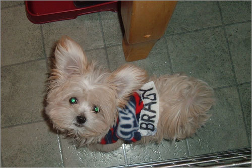 We've gotten so many photos of little Patriots fans -- both human and pet varieties -- that we've created an entire gallery full of them! The Holt family of Seabrook, N.H., sends in this photo of 'Brady Thomas', a dead ringer for the Patriots's quarterback. Send us your Pats photos!