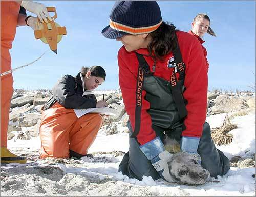 Olguin-Lira (left) and Jane LaRocque took vital signs and photos before treating the seal.