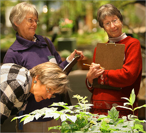 Flower show judges (from left) Jeanne Leszczynski of Needham, Sheila Magullion of Natick, and Holly Perry of Dedham looked over an arrangement at the New England Flower Show at the Bayside Expo Center in Boston.