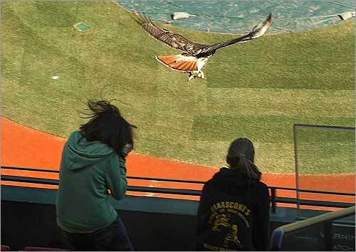 Rodriguez was in the upper deck behind home plate, where the tour was being seated. The hawk swooped down as the student was getting ready to leave.