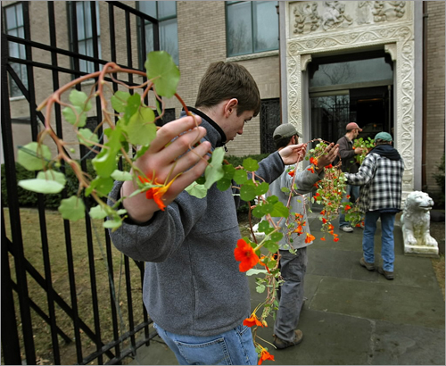Four handlers transported vines of hanging nasturtiums to the front entrance of the Isabella Stewart Gardner Museum for the museum's annual celebration of spring.