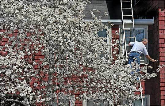 Surrounded by flowering magnolias, a contractor scraped off old paint from a house in Cambridgeport.
