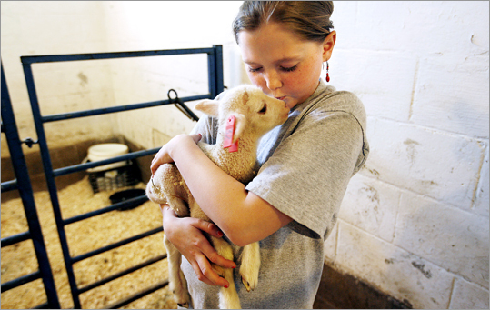 Ellen Dark, 13, of Lincoln, R.I., with a lamb at The Inn at East Hill Farm, Troy, N.H.