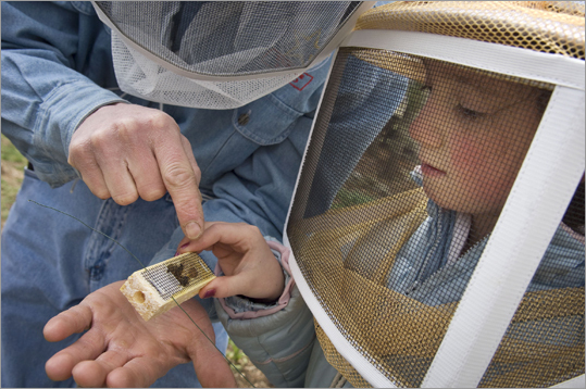 Peter Tullock, a furniture maker and restorer, studied a queen bee with his 8-year old daughter, Madison.