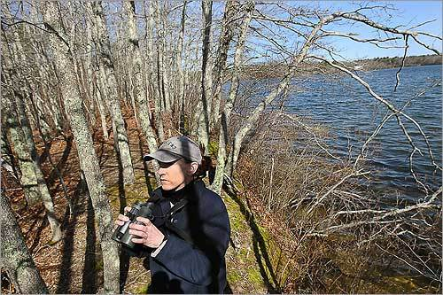 Mary Keleher searched for nesting birds in woods next to Santuit Pond in Mashpee. Keleher is one of the most tenacious volunteers in an ambitious five-year study of all feathery species that breed from Nantucket to North Adams.