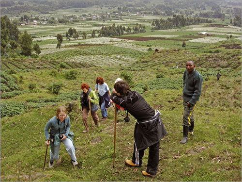 Hikers navigating the hills leading into Volcanoes National Park while guide Jean-Claude Nseminga looks on.