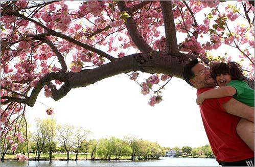Clara Barry, 7, leaped into the arms of her father, Rick, after climbing a tree along the Charles River in Cambridge.