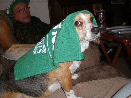 Rondo the Beagle is calm, cool, and collected -- much like his namesake -- while chilling on the couch. Send us your Celtics fan photos!