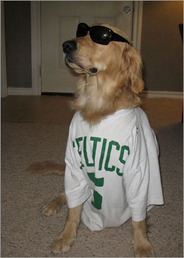 According to his Oklahoma-based owner, Ty, Winslow the golden retriever has 'an irrational hatred for the L.A. Lakers'. We just love the shades that put Jack Nicholson to shame. Send us your Celtics fan photos!