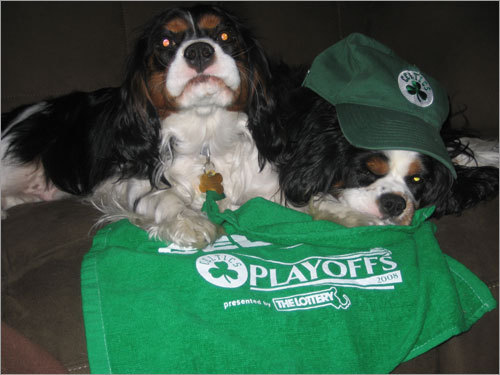 Sampson and Cooper root for the Gang in Green from Stamford, Conn. Send us your Celtics fan photos!