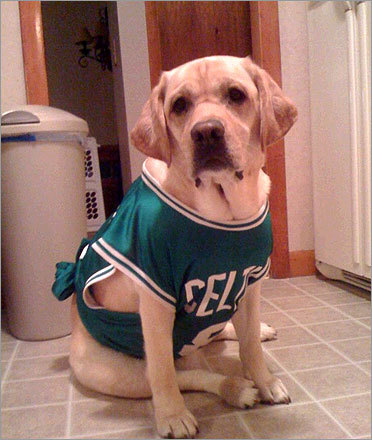 Michael Croteau of Peabody dressed his 4-year-old lab Kasey in Celtics attire for the finals. Send us your Celtics fan photos!