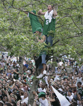Celtics fans in Copley Square scaled trees on Boylston Street and hung on to the limbs to get a better view of the duck boats laden with champions.