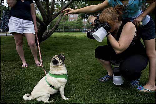 Mim Adkins took a picture of Sophie the pug during a pet portrait session for The Day of Dog Fund-raiser in Peters Park in Boston. The fund-raiser, started by Adkins, raises money for the Massachusetts Society for the Prevention of Cruelty to Animals and the Animal Rescue League.