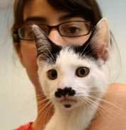 Abigayil Kelman, 16, of Lynn, gave Groucho, named for his facial markings, a new home.