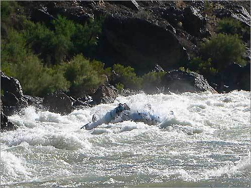 We had two 24-foot motorized boats with 26 people including the crew. I liked being able to look around and not worry about paddling, although Arizona River Runners offers that option. We started as 26 strangers and became bonded in the beauty of it all. One of 190 rapids you go through on Colorado River. The size of the rapids runs from 1 - 10, this particular rapid being a 9, which swallows up the 24-foot boat.