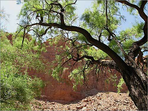 An acacia tree sets off yet another spectacular rock wall