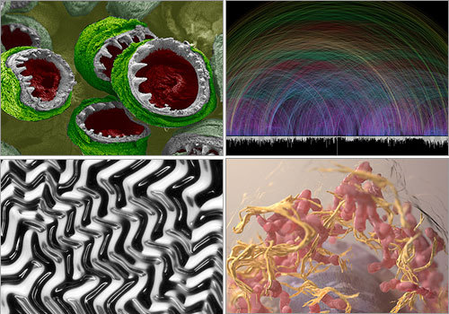 The 2008 International Science and Engineering Visualization Challenge honors representations of the scientific world through either photographs or graphics. Scroll through this gallery to see the 2008 winners. The contest is sponsored jointly by the journal Science, which published the images, and the National Science Foundation.