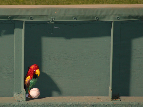 Parlay the Parrot, the Red Sox' bullpen mascot, was ready to go before Game 4.