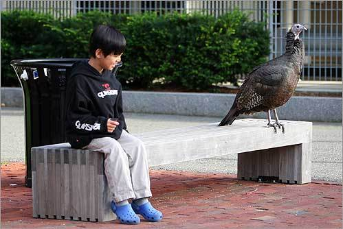 Seven-year-old Samuel Pak, of Lexington, shared a bench with 'Turk Turkee' who makes her home at the Harvard Business School.