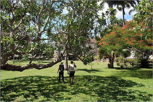A hike through St. John's Parish goes through the grounds of Codrington College, where young West Indians study theology in the hush of majestic coral stone buildings.