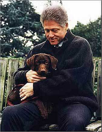 Bill's best friend President Bill Clinton was constantly photographed with his cute chocolate Lab, Buddy. Left, President Clinton held the 3-month-old Buddy in 1997.