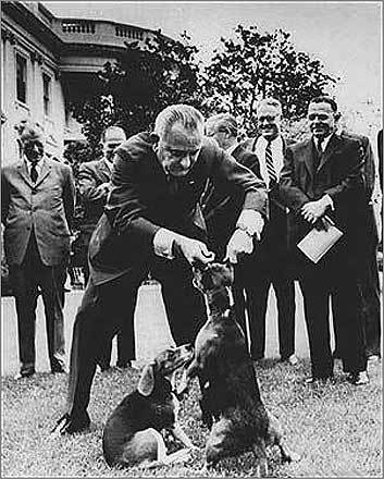 The famous Beagle yowel President Lyndon B. Johnson had several dogs, including a pair of beagles, Him and Her. He also made a move once that would have enraged animal activists, lifting Him off the ground by his ears, in 1964, eliciting a classic beagle yowel.