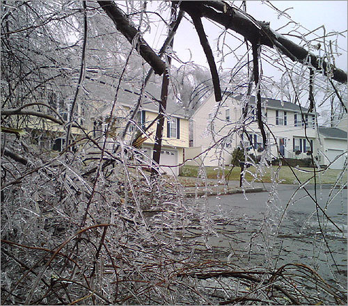 Ice-covered branches created a mess on a residential street in Worcester.