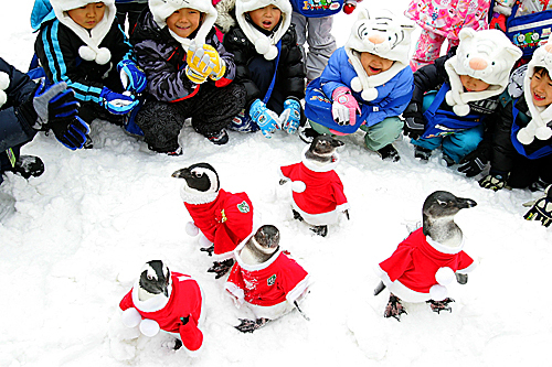 Children watched penguins dressed in Santa Claus costumes at Everland, South Korea's largest amusement park, on Dec. 19. Christmas has become increasingly popular in South Korea, which is the only East Asian country to recognize it as a national holiday.