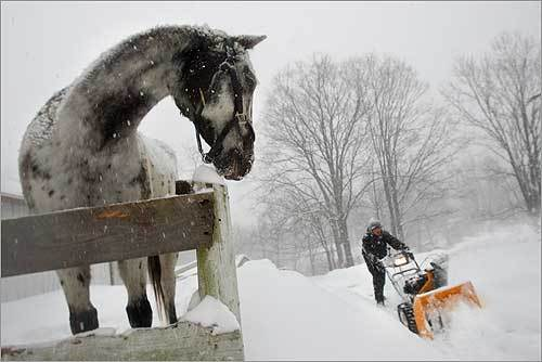 Sixteen-year-old Selah Smart of Boxborough used a snowblower to clear a path to his horses Wallapooluza (pictured) and Sara Sioux on Sunday.