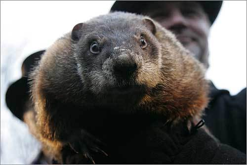 Phil gets his longevity from drinking the secret 'elixir of life.' Phil takes one sip every summer at the Groundhog Picnic and it magically gives him seven more years of life, according to the Groundhog Club's website.