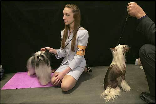 Kristen Potts of San Antonio and Mark Balswin of Mansfield, Mich., waited backstage with their dogs.