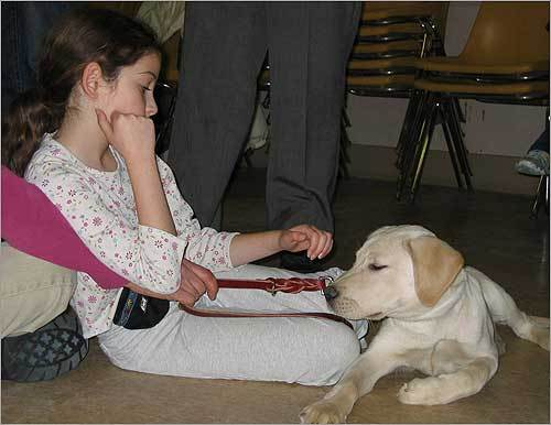 Seeing eye dogs are trained as puppies. Sarah Mamlet of Acton with Alden at the Carter Memorial United Methodist Church in Needham during a one-hour lesson together.