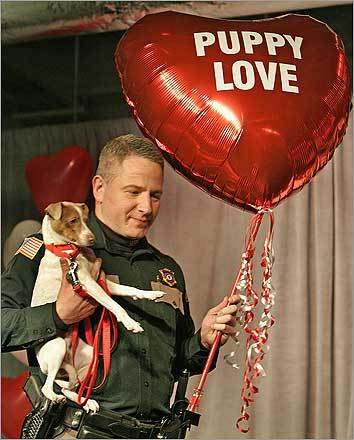Peter Gollub, director of law enforcement at MSPCA, held Lucky, a rat terrier, and a 'Puppy Love' balloon at a Valentine's Day celebration at the New England Confectionery Co. in 2007.