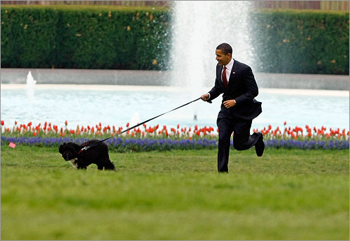 Puppies and leaks go hand in hand, so it should come as no surprise that the identity of the Obama family's new pup 'leaked' out early. Bo, a Portuguese water dog, is a gift to the Obama girls from Senator Ted Kennedy, who was a big fan of the breed. Bo's identity was unleashed by a mysterious Internet site. At left, President Obama took Bo for a spin around the White House lawn. Read the article