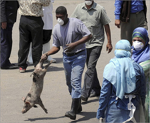 In Egypt, roughly 300,000 pigs have been slaughtered in a preventative measure against swine flu. Angered farmers blocked streets and stoned vehicles of Health Ministry workers who came to carry out the government's order.