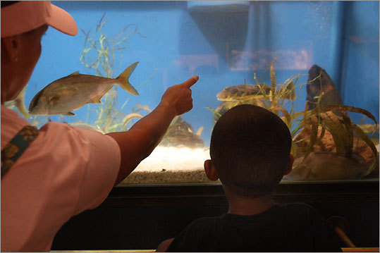 Carol Christian points out a fish to her son at the Woods Hole Science Aquarium.