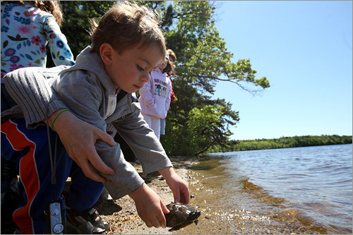 Turtles released in Middleborough