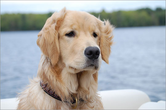 Bailey takes his first boat ride on Saturday Pond in Otisfield, Maine.