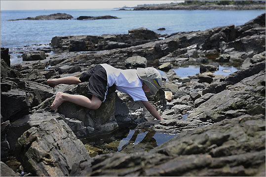Dylan Lewis hunts for periwinkles at Cape Neddick.