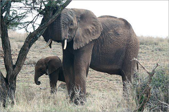kenya wildlife reserve