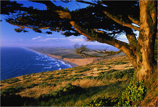 Marin County, California is a place where the almost 70,000 acres of wind swept wildness of Point Reyes National Seashore coexists with cattle ranches, dairy farms, and small organic market gardens.