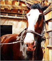 Former police horses find greener pastures